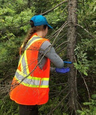Brianna Bowes coring a tree